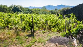 abandoned vineyard and rural house on Etna