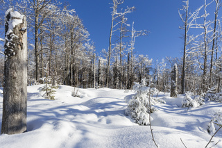 Winter im Bayerischen Wald, winter in bavarian forest