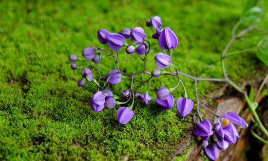 nature background, violet flowers, purple petal