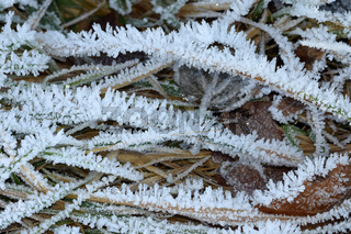 Raureif; hoar; rime; Covered with frost;