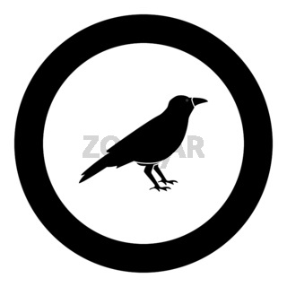 Crow black icon in circle vector illustration
