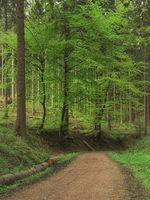 Deister - Range of hills, forest path, Germany