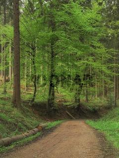 Deister - Höhenzug, Waldweg, Deutschland
