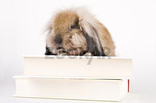 Hase mit Büchern - hare with books