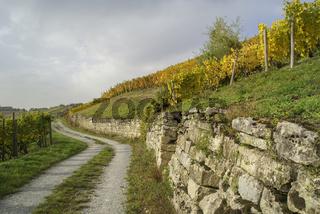 Herbstliche Weinberge in Ingelfingen, Baden-Wuerttemberg