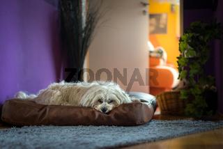 Hund auf seinem Platz
