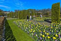 Flower beds, Keukenhof Flower Gardens, Lisse, Netherlands