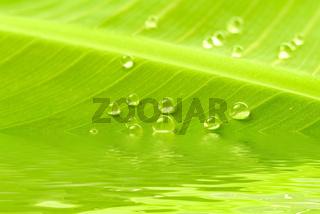 Bananenblatt mit Wassertropfen