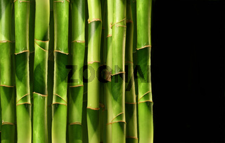 Bamboo shoots stacked side by side