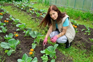 Girl gardener smiles and loose soil on a bed of cabbage on a cou