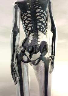 Gläserner weiblicher Körper