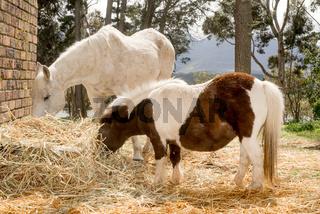 Horse and pony feeding
