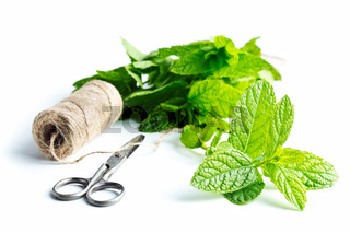 Branch mint leaves and thread with scissors.
