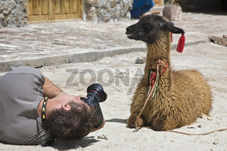 Fotograf mit Lama (Lama glama)