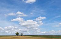 Walnussbäume (Juglans regia) vor Wolkenhimmel