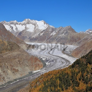 Autumn scene in Valais, Switzerland. Colorful forest, Aletsch glacier and mountains.