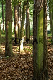 Wald in Graal-Müritz
