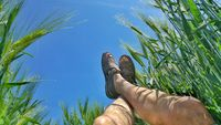 Feet of a man in a cereal field
