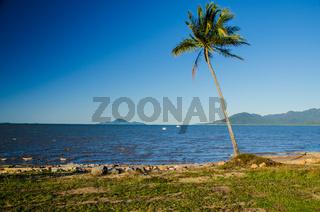 Kokospalme am Strand