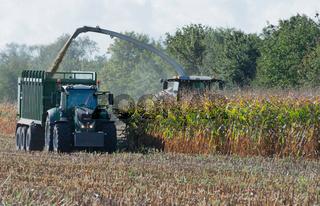 Maishäcksler und Traktor bei der Maisernte
