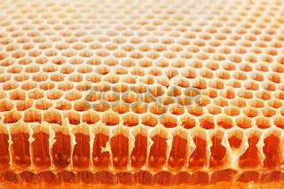 Golden real honeycomb shot close up
