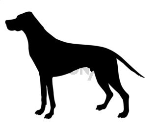silhouette beagle isolated on white background