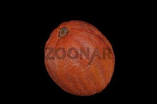 Taschentuchbaum (Davidia involucrata)