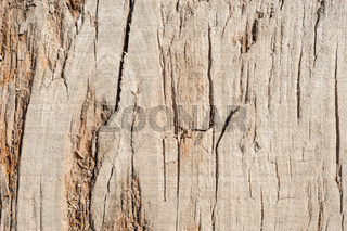 Wood planks, texture with natural pattern