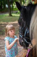 Cute little girl stroking  head of a black horse