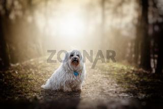 Kleiner weißer Hund