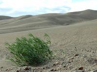 die Wüste lebt - living dessert