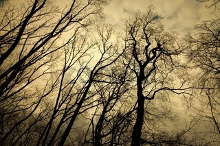 Leafless trees with creepy branches