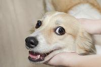 The dog's head in children's hands