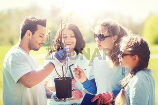 group of volunteers planting trees in park