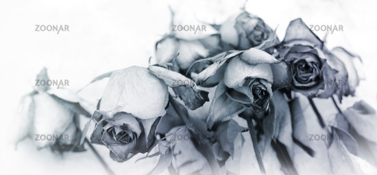 faded flower concept mourning motif