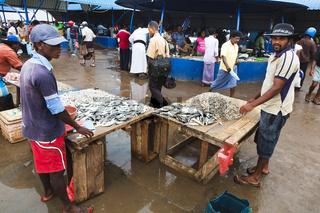 Fischmarkt - Negombo, Sri Lanka