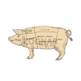 Vintage Pork Meat Cut Map Drawing