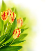Floral border with tulips