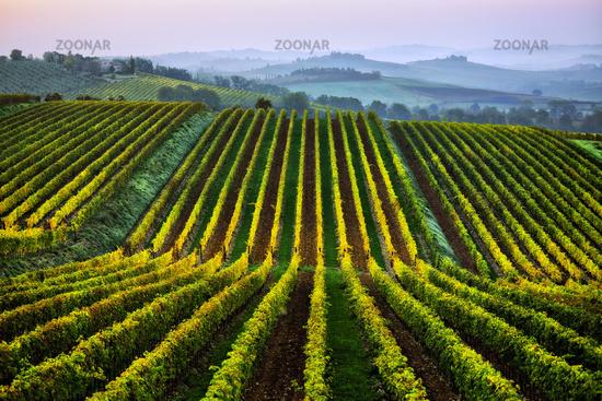Chianti landscape near Lilliano, Tuscany, Italy