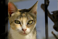 Portrait of a mother cat