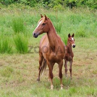 Pferd - horse 23