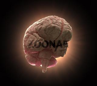 Human brain background illustration
