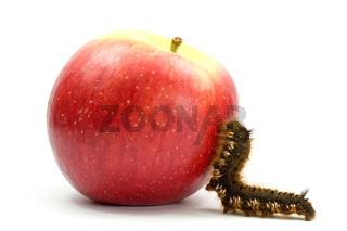 caterpillar climb to the apple