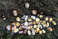 rock shell, Brittany, France
