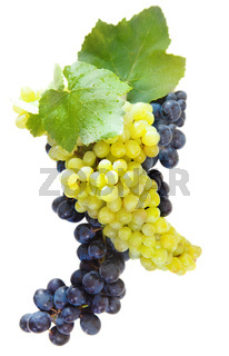 Bunches of a grapes and wine leaves