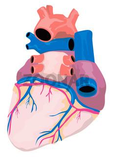 Heart Organ Retro