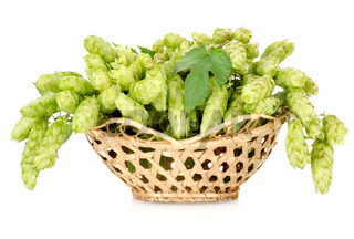 Hops in a basket isolated