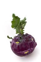 cabbage turnip - brassica oleracea gongylodes