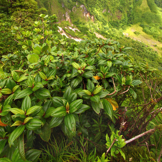 Saint Kitts Tropical Vegetation