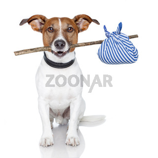 dog with a stick and a blue bag